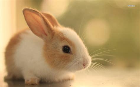 coding bunny baby bunnies wallpaper wallpapersafari