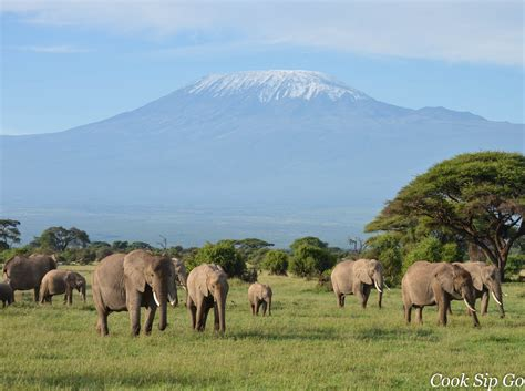 Boneka Grassland By Elie Gallery amboseli national park kenya pictures and and news
