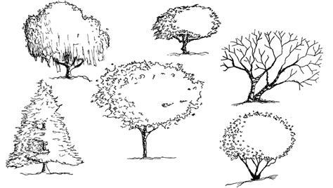 tree symbolism architecture sketches tree www pixshark com images