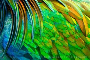 bird with colorful feathers rick alonzo photography ta photographer portraits