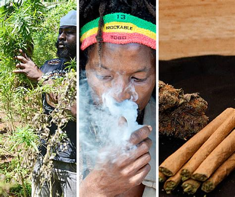 Expungement Of Criminal Record In Jamaica Has Ganja Been Given The Green Light Digjamaica