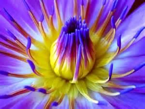 Lotus Flower Scent Flowerbomb Viktor Rolf Type Fragrance Fragrance Oils