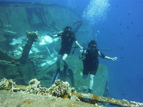 aqaba dive japanes garden picture of aqaba international dive