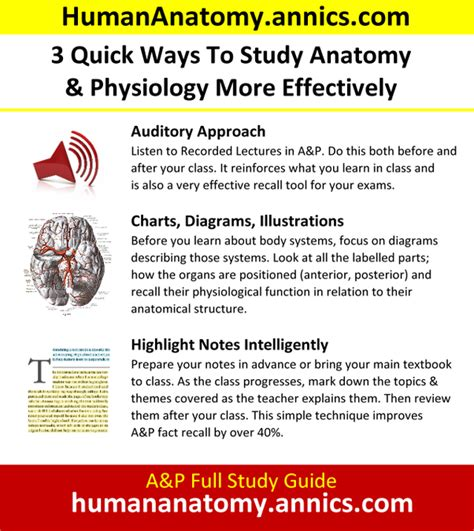Pdf Best Way To Study Anatomy what s the best way to study human anatomy quora