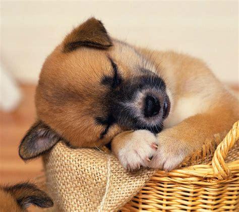 perros que duermen mi perro duerme mucho 191 por que aqu 237 la soluci 211 n 100