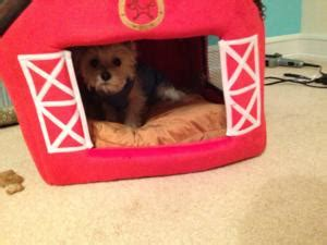 red barn dog house little red barn pet house by ny dog at baxterboo