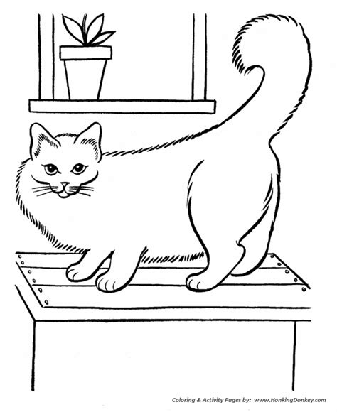 fluffy kitten coloring page pet cat coloring pages big fluffy and picture to pin on