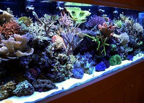 aquarium design india chennai tamil nadu marine aquarium fishes in chennai tamil nadu salt water