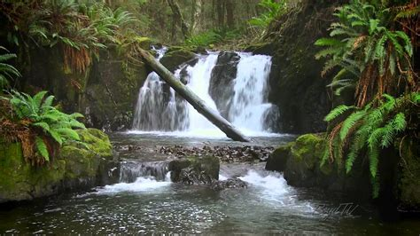 forest waterfall hd  calming sound  water youtube