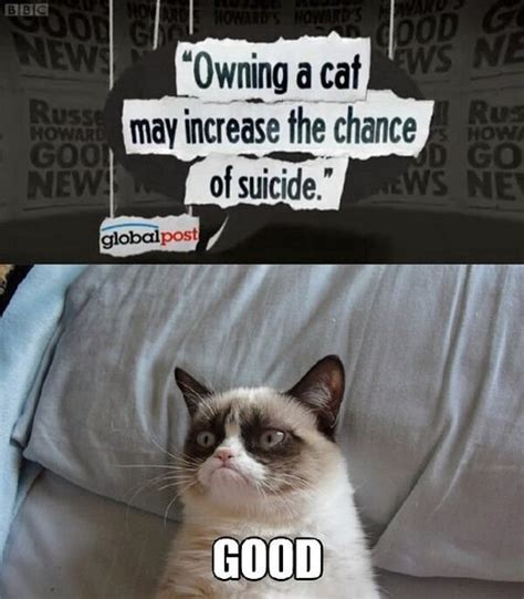 Angry Cat Good Meme - suicide grumpy cat know your meme