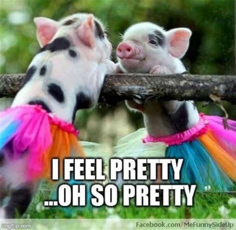 Pig Meme - 32 very funny pigs meme photos and pictures