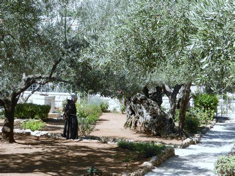 giardino dei getsemani 17 settembre 2012 orto dei getzemani il mio viaggio in