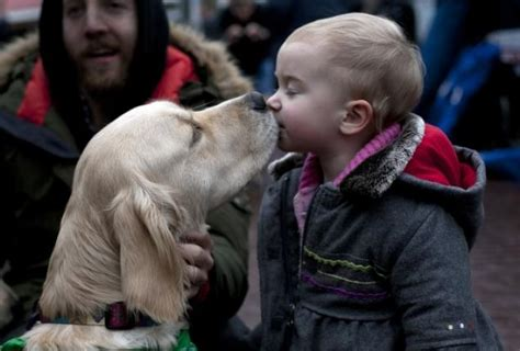 how to comfort a dog comfort dogs helping ease pain of sandy hook tragedy ny