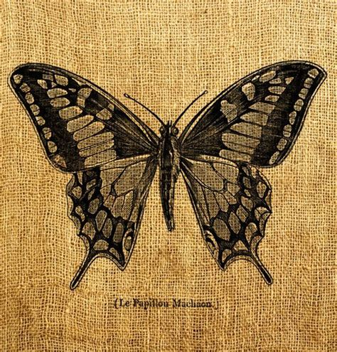 tattoo butterfly vintage 20 best vintage butterfly tattoos images on pinterest