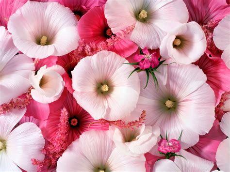 wallpaper bunga lucu kumpulan gambar bunga romantis i love you animasi