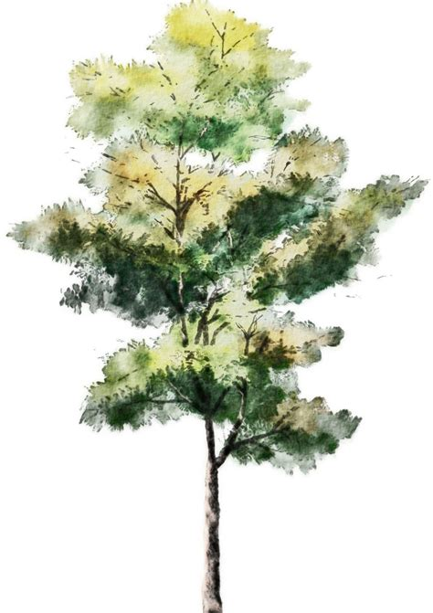 water color tree watercolor softness and warmth illustrated nature