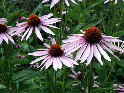 A Guide To Annuals Versus Perennials Hgtv Garden Flowers Annuals
