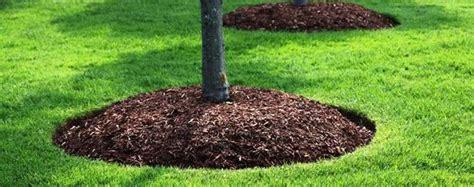 corteccia da giardino come proteggere le piante giardino dal freddo