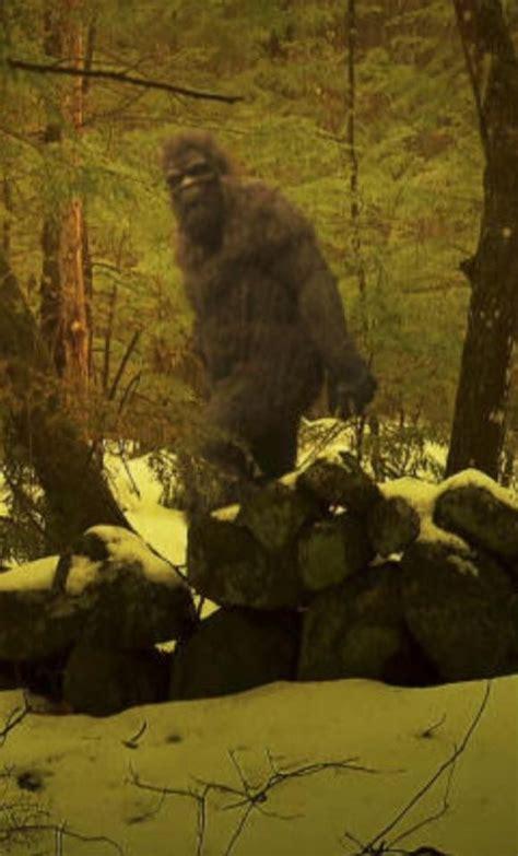 best bigfoot 17 best ideas about bigfoot sightings on