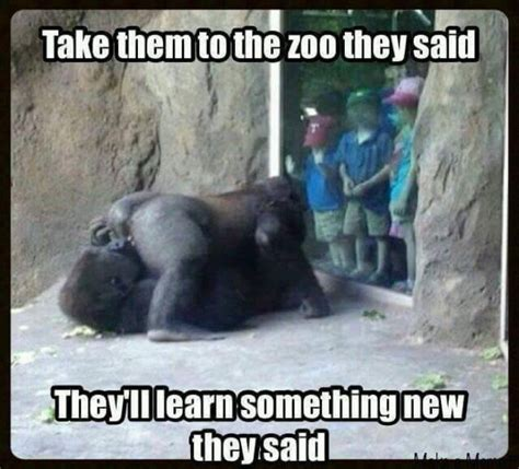 Funny Gorilla Meme - funny gorillas at the zoo meme memeologist com