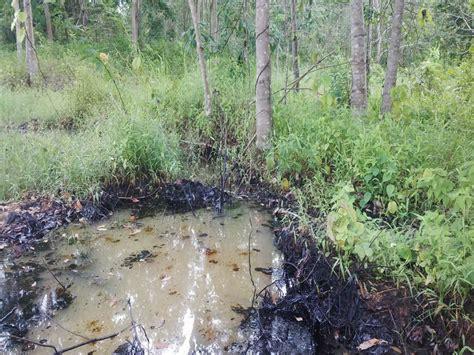 Bola Ubi Kopong Mentah waduh tumpahan minyak mentah cemari sungai dan kebun warga okezone news