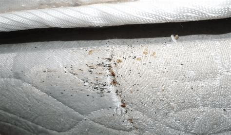 does cold kill bed bugs does freezing kill bed bugs 28 images 17 best ideas