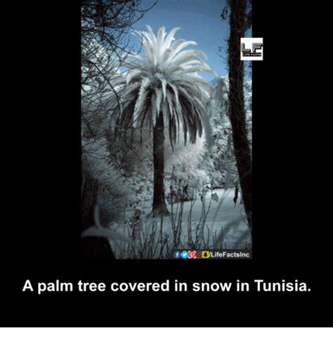 palm meme 25 best memes about palm trees palm trees memes