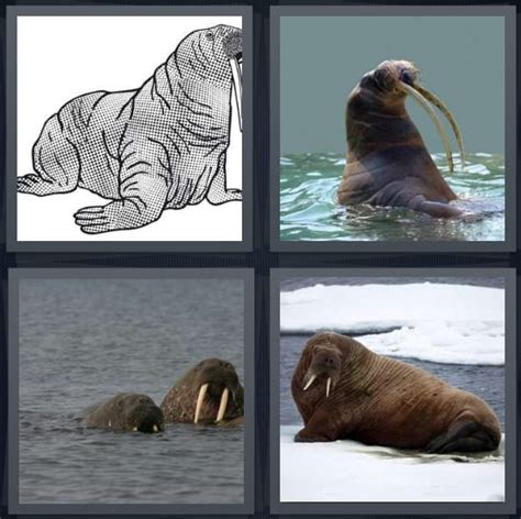 Drawing 4 Pics 1 Word by 4 Pics 1 Word Answers For Drawing Tusk Swim Mammal