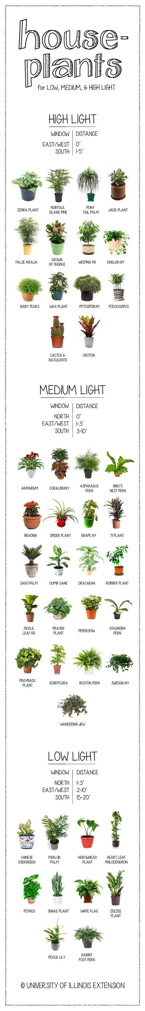 how much light does a plant need best 20 low light houseplants ideas on indoor