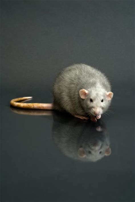 rat poison in dogs the effects of rat poison on dogs cats pets