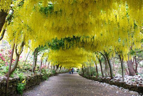 Bodnant Garden Laburnum Arch Gardens To Visit In Wales Gardens In Wales