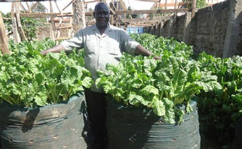 Kitchen Garden Farming In Kenya Spinach Farmer Makes Sh100 000 In Profit Per Month