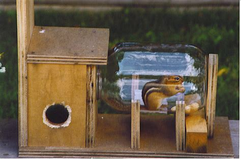 chipmunk house chipmunk house 28 images can chipmunks damage my house with pictures ehow just