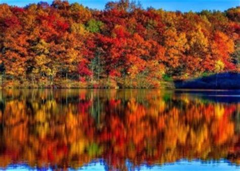 what causes the leaves to change color in the fall autumn leaves chromatography educational innovations