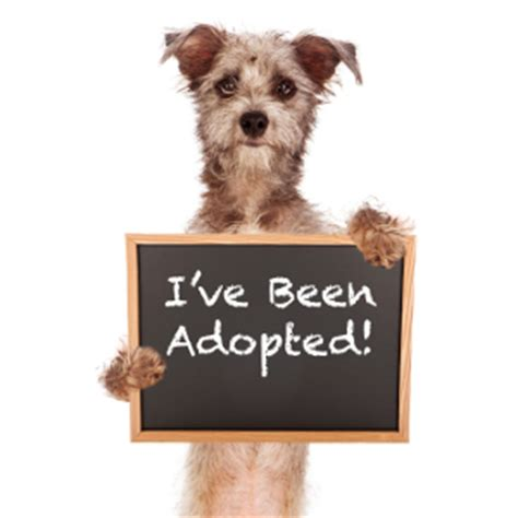 i want to adopt a puppy adopt big ranch rescue