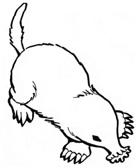 mole coloring free animal coloring pages sheets mole