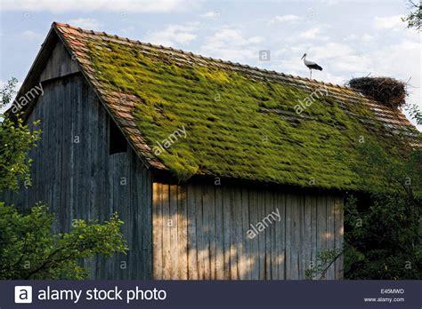 techo village cig 252 e 241 a blanca ciconia ciconia anidan en el techo del