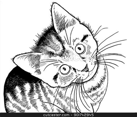 coloring pages of real cats 18 best images about clip art for cakes on pinterest