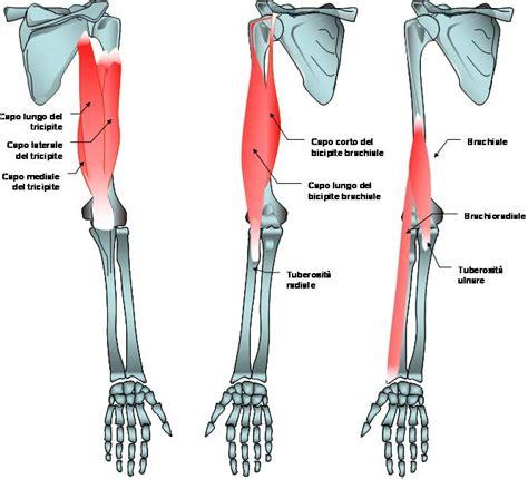 dolore braccio sinistro interno voglio le braccia grosse dcss