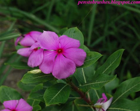 list of flower names and pictures beautiful flowers