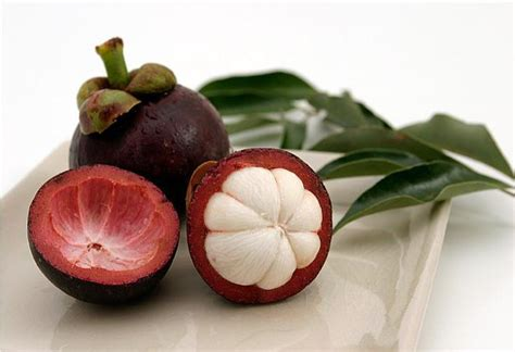 Obat Kolesterol healthy with traditional efficacy of mangosteen fruit for health as hiv aids drugs