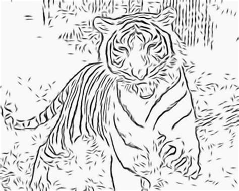 Baby White Tigers Coloring Pages White Tiger Coloring Pages