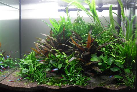 Soil Aquascape the soil substrate or dirted planted tank a how to guide