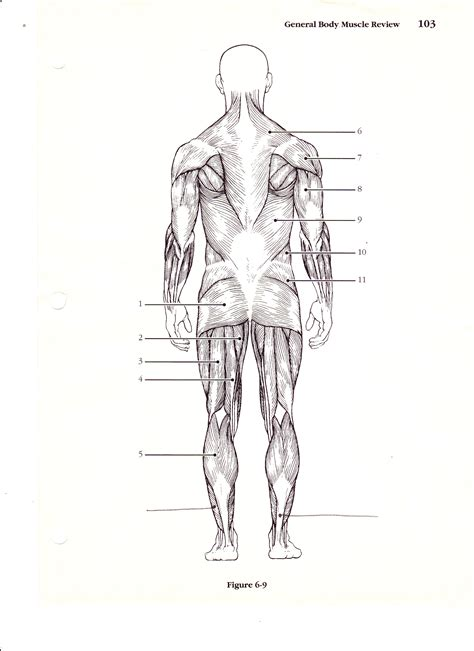 human muscles diagram back diagram search results calendar 2015