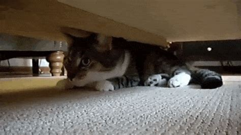 cat hiding under bed these 25 ninja cats have mastered the art of hide and seek