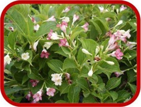 piante con fiori rosa piante con fiori rosa