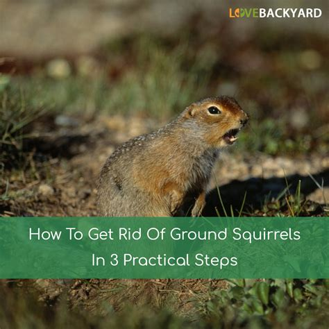how to get rid of ground squirrels in 3 practical steps