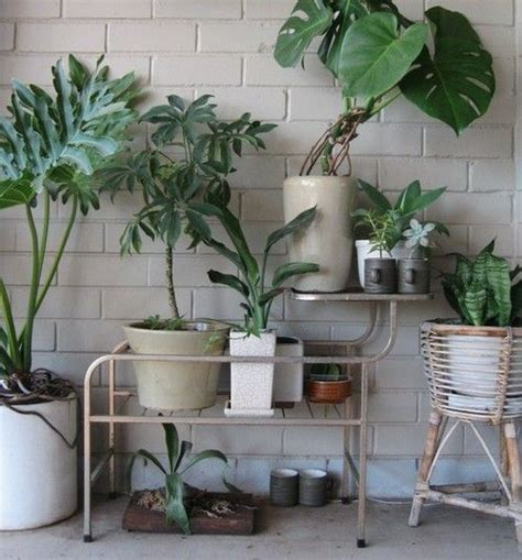light tropicals swiss cheese plant greenery