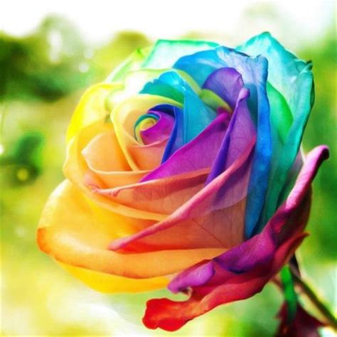 200pcs multi color rare rainbow rose flower seeds garden