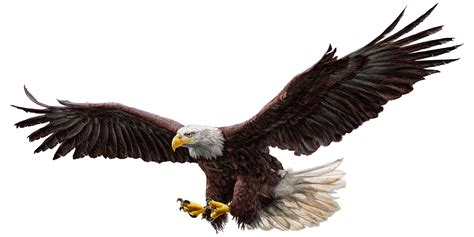 Fly An Eagle by Building Thought Leadership By Giving Away Your Ideas